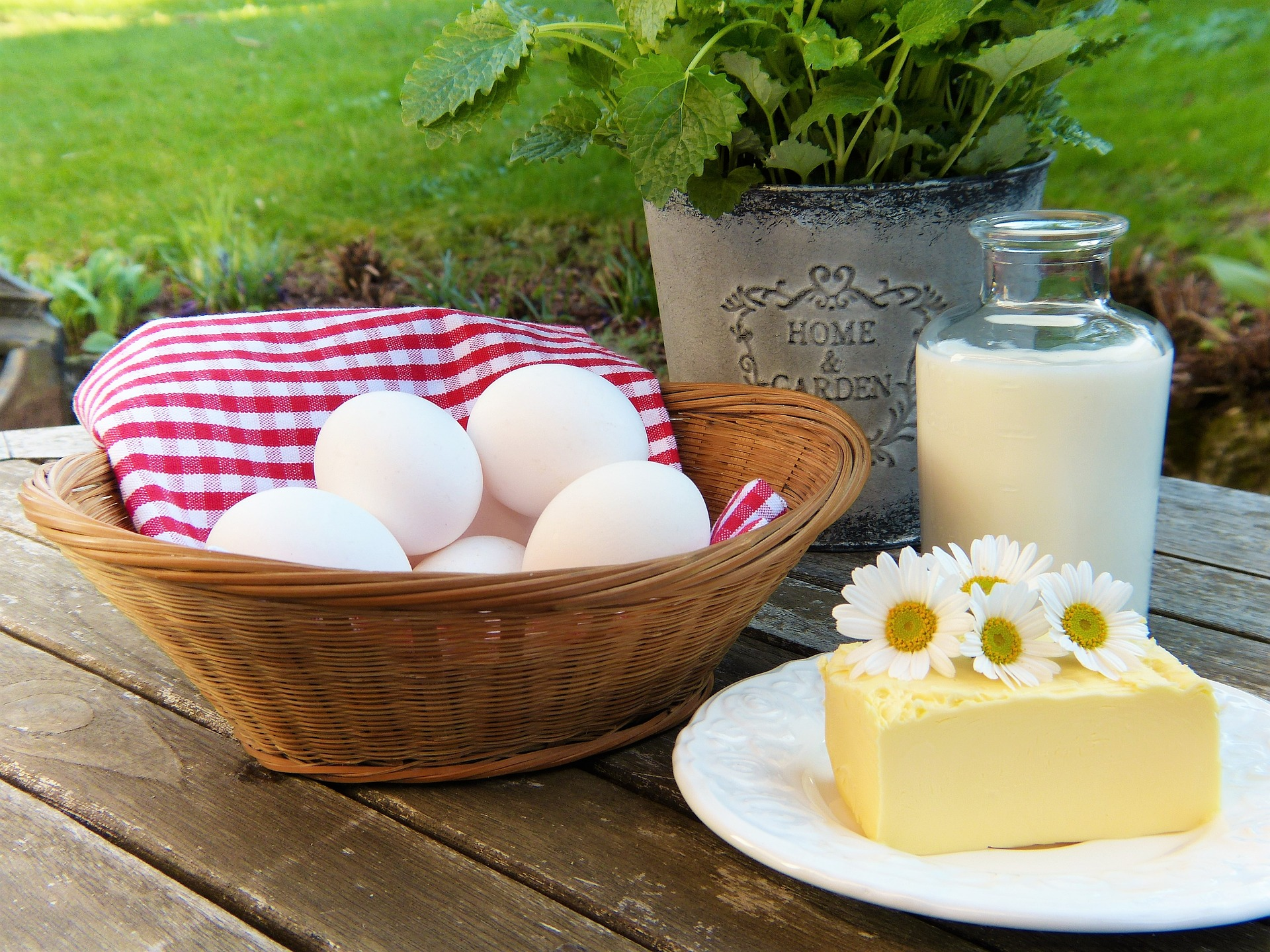 milk and egg diet