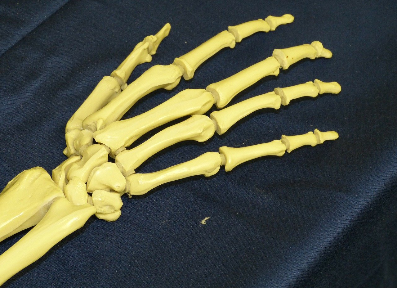 finger bone